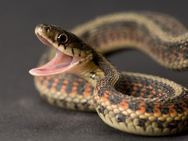 Animal serpiente
